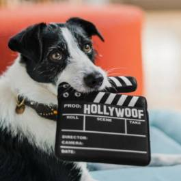 HONDENSPEELGOED P.L.A.Y. Hollywoof Collection - Klapbord